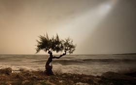 Обои дерево, серые облака, волны, гроза, дождливый, солнечный свет, пляж