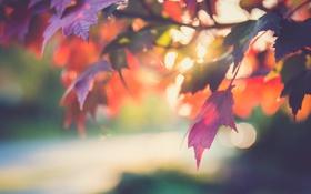 Обои дерево, природа, листья