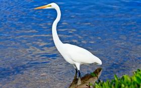 Картинка вода, природа, птица, клюв