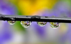 Обои вода, капли, роса, фон, цвет, проволока, провод