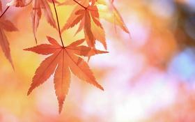Обои осень, природа, лист, дерево