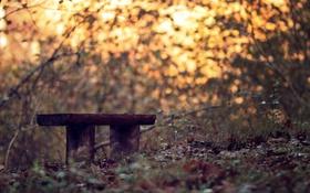Картинка скамья, парк, свет