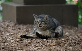 Картинка кот, морда, кошак, котяра