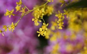 Обои цветы, желтые, сиреневые