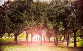 Обои осень, солнце, деревья, парк, сияние, Sun, Autumn
