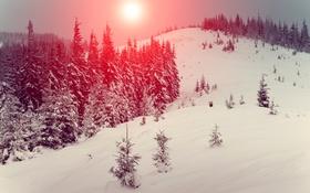 Обои закат, лес, деревья, холм, зима, снег, солнце