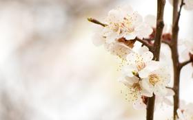 Картинка природа, цветы, лепестки, деревья, боке