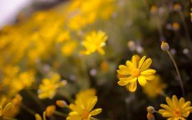 Обои цветы, фон, природа