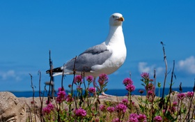 Обои море, небо, камень, чайка, клевер