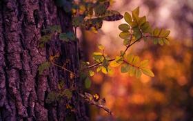 Обои осень, свет, дерево