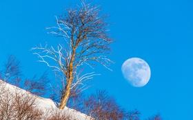 Обои зима, небо, снег, пейзаж, дерево, Луна, склон