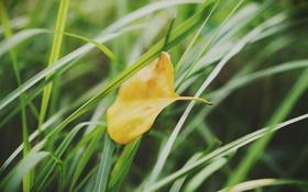 Обои трава, желтый, лист, зеленая