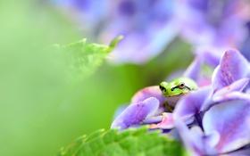 Обои цветок, листья, лягушка