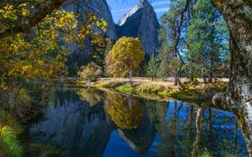 Обои США, лес, река, осень, Yosemite National Park, Калифорния, деревья