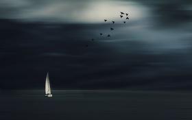 Картинка море, птицы, ночь, лодка