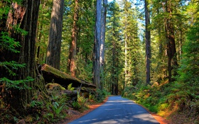 Картинка дорога, лес, деревья, солнечно