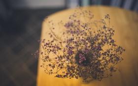 Обои цветы, стол, высушенные, ваза