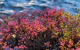 Обои осень, листья, река, куст, поток