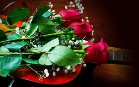 Обои цветы, розы, красные