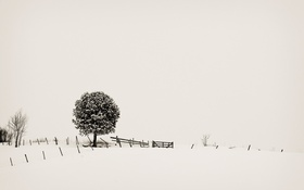 Обои снег, дерево, минимализм, minimalism