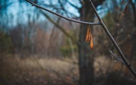 Картинка природа, листок, ветка
