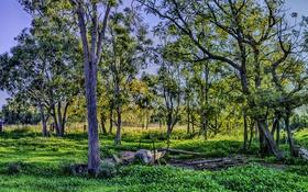 Обои осень, участки, деревья, трава, ранняя, забор, HDR
