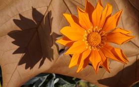 Картинка лепестки, лист, краски, осень, цветок