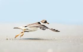 Обои песок, пляж, небо, полет, крылья, чайка, работает
