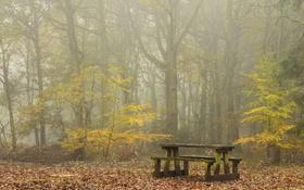 Обои осень, туман, стол, скамья