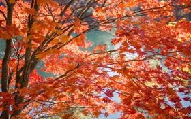 Картинка осень, листья, вода, ветки, дерево, краски
