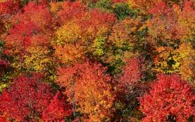 Картинка осень, лес, листья, деревь, багрянец