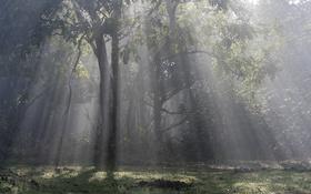 Картинка свет, природа, дерево