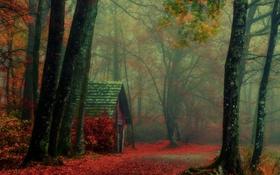 Обои осень, лес, деревья, туман, путь, ветви, кабина