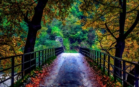 Картинка деревья, мост, природа, осень. листья