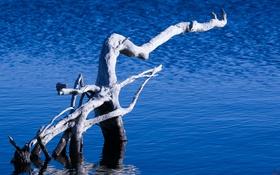 Картинка природа, озеро, дерево