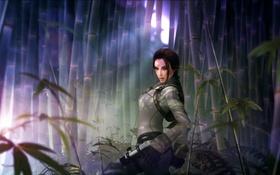 Обои лес, взгляд, девушка, красавица, Tomb Raider, Square Enix, Lara Croft