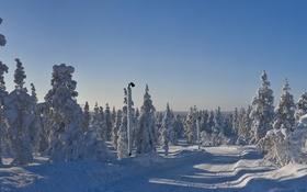 Картинка зима, дорога, небо, снег, деревья, улица, ель