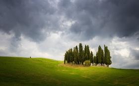 Обои поле, деревья, природа