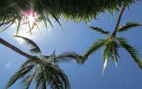 Обои трава, небо, пальмы, солнце