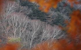 Обои склон, деревья, лес, осень