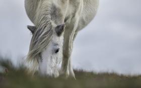 Обои морда, конь, лошадь, пастбище, грива, челка