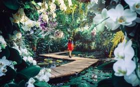 Картинка девушка, цветы, орхидеи