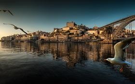 Обои пейзаж, птицы, мост, лодка, дома, панорама, Португалия