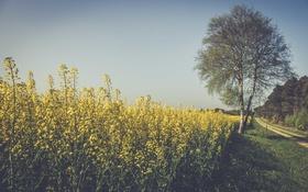 Картинка дорога, небо, цветы, дерево, тень, поле цветы