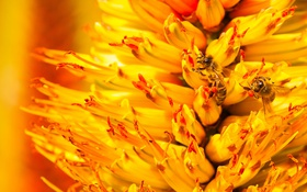 Обои цветок, пчела, растение, лепестки, насекомое