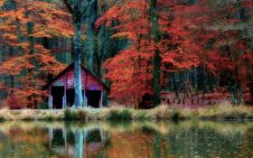 Обои лес, осень, деревья, зеркало, отражение, кабина, озеро