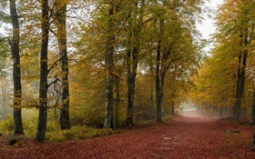 Обои осень, деревья, дорога, туман