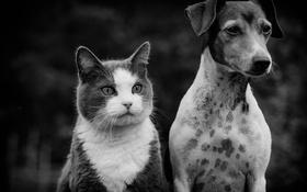 Обои кот, взгляд, собака, друзья