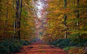 Обои дорога, осень, лес, листья, деревья, аллея