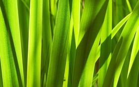 Картинка стебель, луг, Зелёная трава